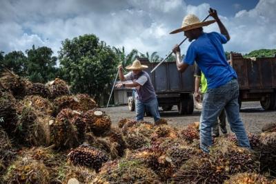 Các ổ dịch ở Đông Nam Á làm gián đoạn sản xuất, đẩy giá cả tăng vọt