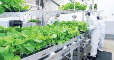 Công ty Nhật Bản chuẩn bị ra mắt vắc xin Covid-19 gốc thực vật đầu tiên